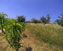 Agriturismo La Perlara a Trezzolano – VR