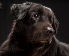 THE BLACK DOGS PROJECT: COME SUPERARE LA SUPERSTIZIONE