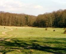 Oasi naturali: il bosco di Macchia Grande a Manziana!