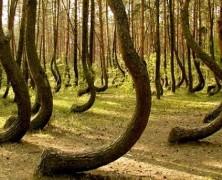 Viaggi alternativi: il mistero della foresta Hoia Baciu