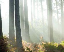 Cannock Chase: la foresta dei misteri